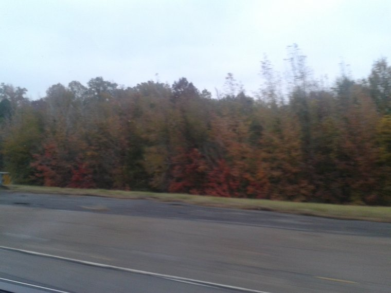 Fall Colored Trees